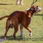 Bermuda Kennel Club Dog Show, October 23 2016-111