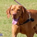 Bermuda Kennel Club Dog Show, October 23 2016-114