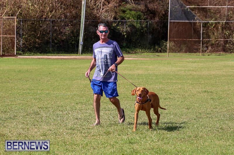 Bermuda-Kennel-Club-Dog-Show-October-23-2016-115