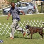 Bermuda Kennel Club Dog Show, October 23 2016-118
