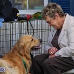 Bermuda Kennel Club Dog Show, October 23 2016-120