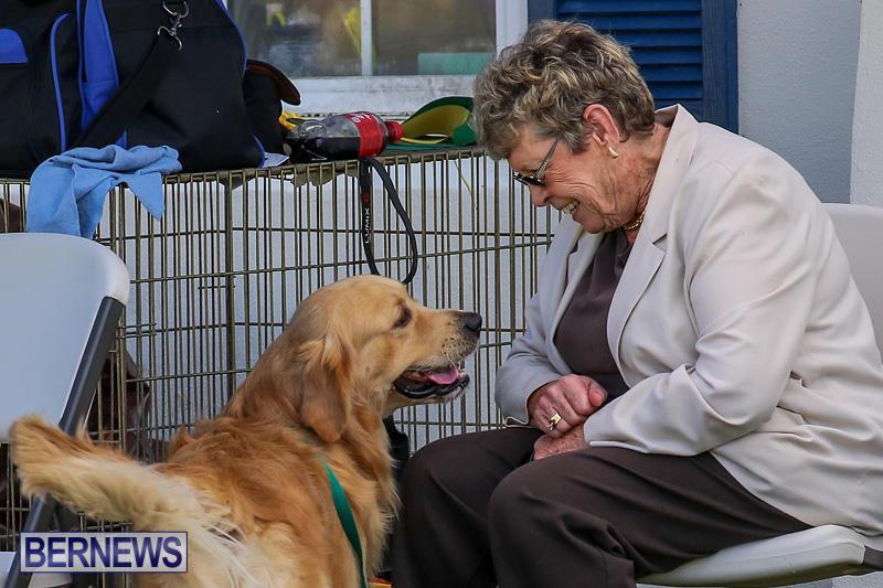 Bermuda-Kennel-Club-Dog-Show-October-23-2016-120