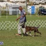 Bermuda Kennel Club Dog Show, October 23 2016-121