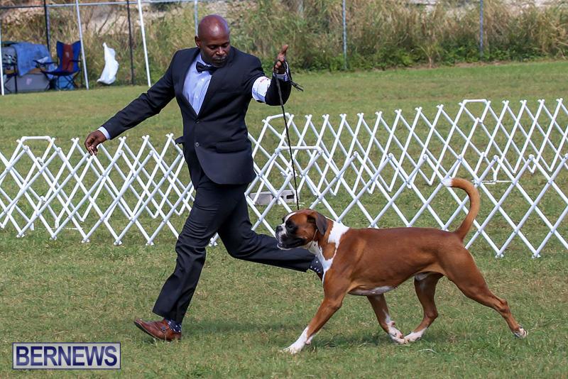 Bermuda-Kennel-Club-Dog-Show-October-23-2016-123