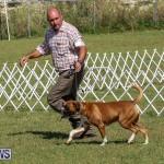 Bermuda Kennel Club Dog Show, October 23 2016-127