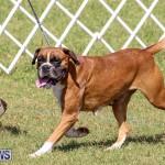 Bermuda Kennel Club Dog Show, October 23 2016-128
