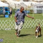 Bermuda Kennel Club Dog Show, October 23 2016-131