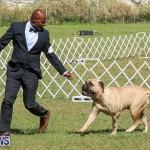 Bermuda Kennel Club Dog Show, October 23 2016-133