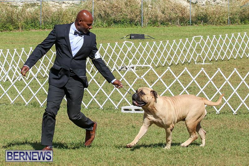 Bermuda-Kennel-Club-Dog-Show-October-23-2016-133