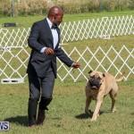 Bermuda Kennel Club Dog Show, October 23 2016-137