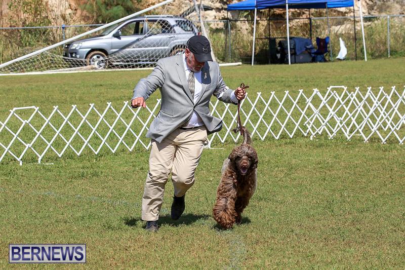 Bermuda-Kennel-Club-Dog-Show-October-23-2016-140