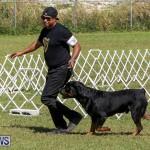 Bermuda Kennel Club Dog Show, October 23 2016-143