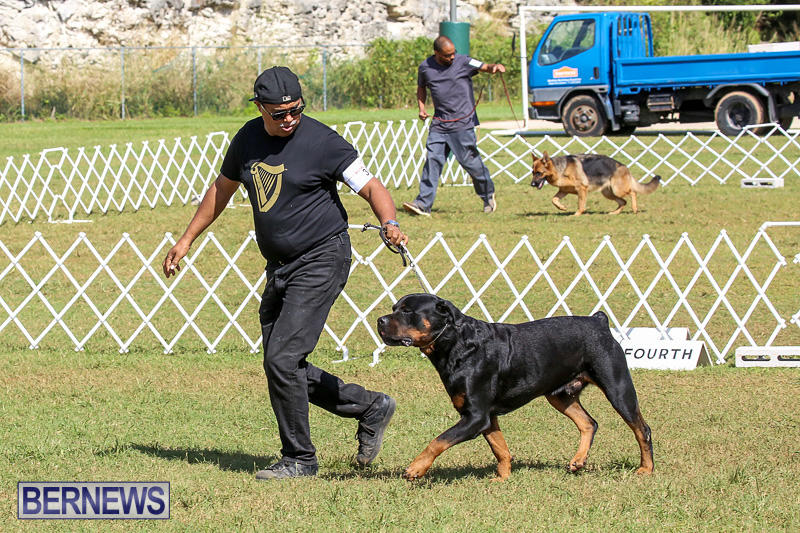 Bermuda-Kennel-Club-Dog-Show-October-23-2016-145