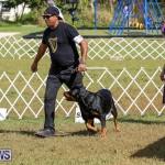 Bermuda Kennel Club Dog Show, October 23 2016-148