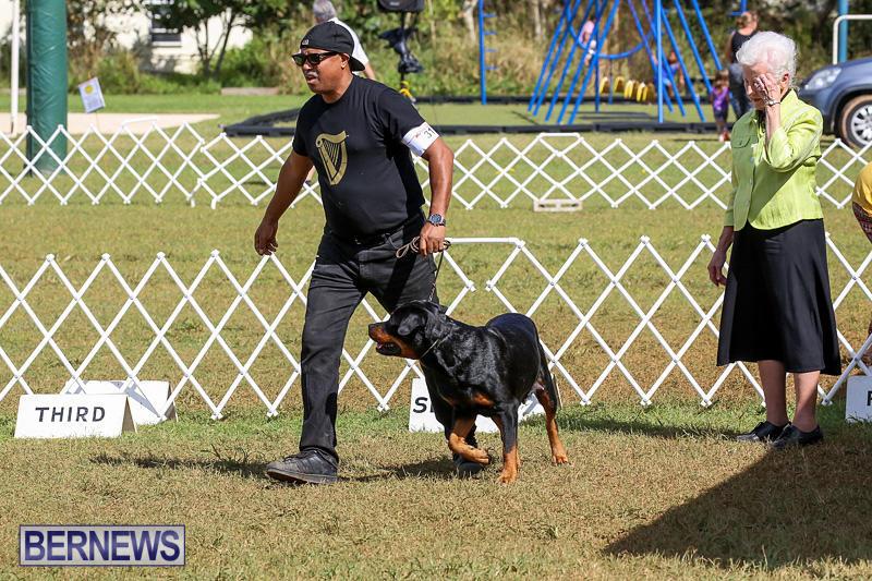 Bermuda-Kennel-Club-Dog-Show-October-23-2016-148