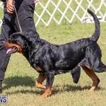 Bermuda Kennel Club Dog Show, October 23 2016-149