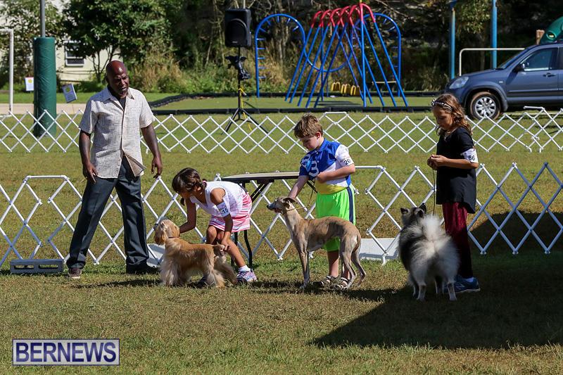 Bermuda-Kennel-Club-Dog-Show-October-23-2016-15