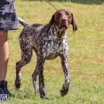 Bermuda Kennel Club Dog Show, October 23 2016-150