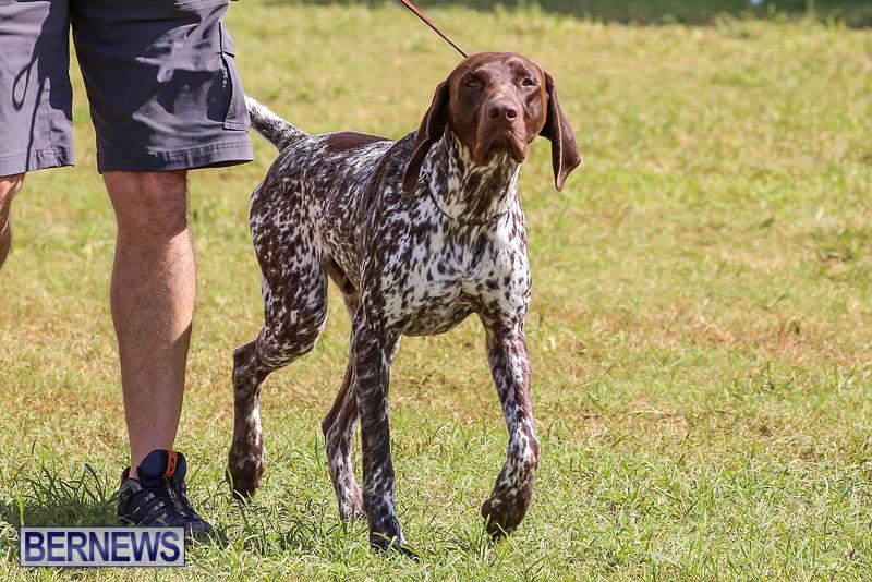 Bermuda-Kennel-Club-Dog-Show-October-23-2016-150