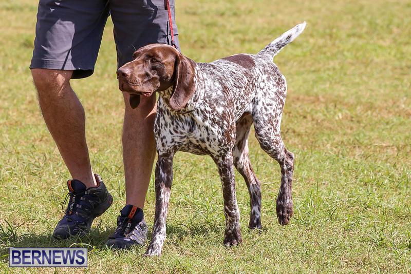 Bermuda-Kennel-Club-Dog-Show-October-23-2016-151