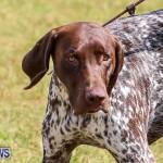 Bermuda Kennel Club Dog Show, October 23 2016-152