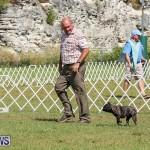Bermuda Kennel Club Dog Show, October 23 2016-153
