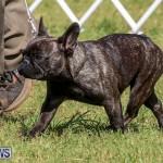 Bermuda Kennel Club Dog Show, October 23 2016-154