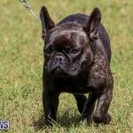 Bermuda Kennel Club Dog Show, October 23 2016-155