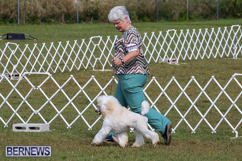Bermuda-Kennel-Club-Dog-Show-October-23-2016-160