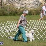 Bermuda Kennel Club Dog Show, October 23 2016-161