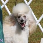 Bermuda Kennel Club Dog Show, October 23 2016-163