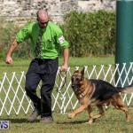 Bermuda Kennel Club Dog Show, October 23 2016-169