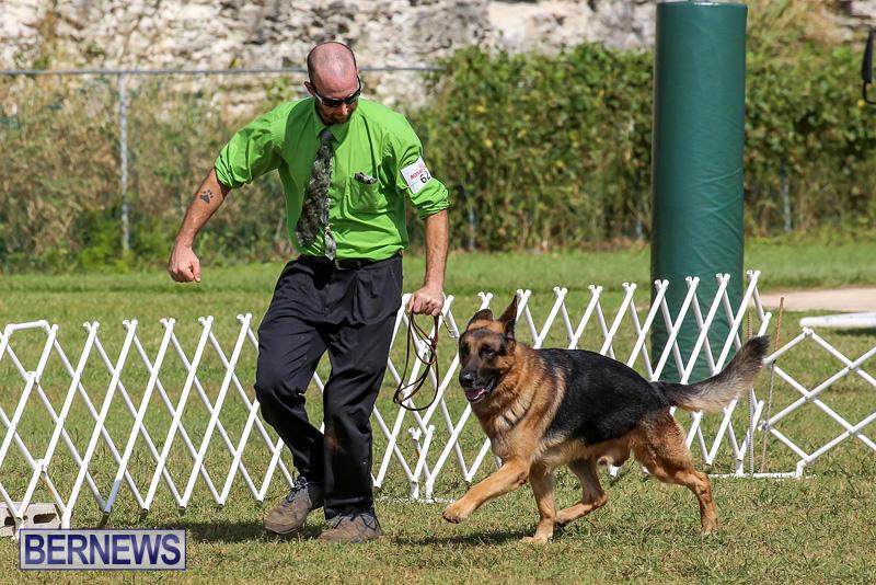 Bermuda-Kennel-Club-Dog-Show-October-23-2016-169