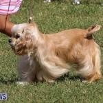 Bermuda Kennel Club Dog Show, October 23 2016-17
