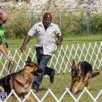 Bermuda Kennel Club Dog Show, October 23 2016-170