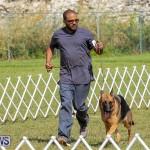 Bermuda Kennel Club Dog Show, October 23 2016-171