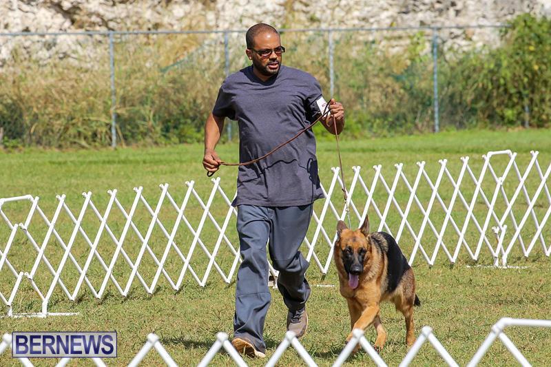 Bermuda-Kennel-Club-Dog-Show-October-23-2016-171