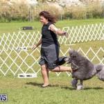 Bermuda Kennel Club Dog Show, October 23 2016-177