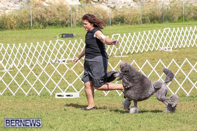 Bermuda-Kennel-Club-Dog-Show-October-23-2016-177