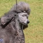 Bermuda Kennel Club Dog Show, October 23 2016-181