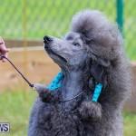 Bermuda Kennel Club Dog Show, October 23 2016-190