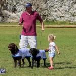 Bermuda Kennel Club Dog Show, October 23 2016-192