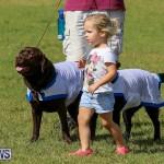 Bermuda Kennel Club Dog Show, October 23 2016-193