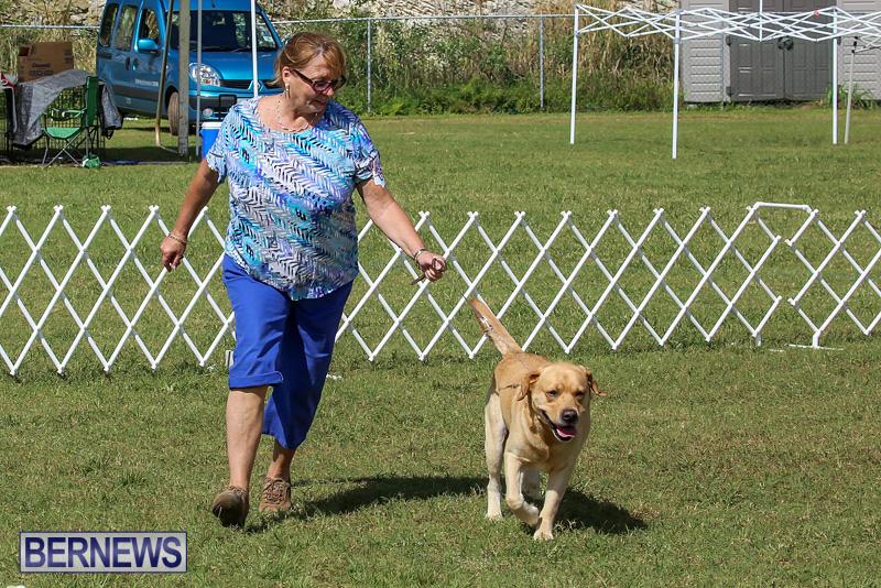 Bermuda-Kennel-Club-Dog-Show-October-23-2016-194