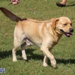 Bermuda Kennel Club Dog Show, October 23 2016-195