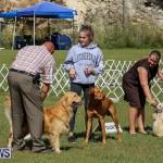 Bermuda Kennel Club Dog Show, October 23 2016-199