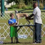 Bermuda Kennel Club Dog Show, October 23 2016-2