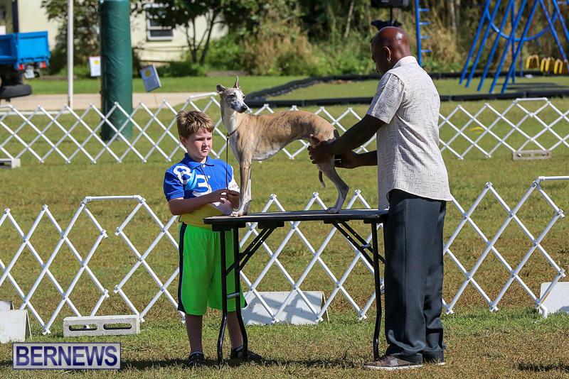 Bermuda-Kennel-Club-Dog-Show-October-23-2016-2