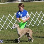 Bermuda Kennel Club Dog Show, October 23 2016-20