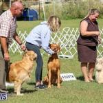 Bermuda Kennel Club Dog Show, October 23 2016-203